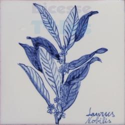 ARH023 Kitchen Aromatic Herbs