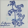 ARH035 Kitchen Aromatic Herbs